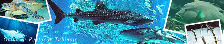 沖縄美ら海水族館と北部の人気ドライブコース